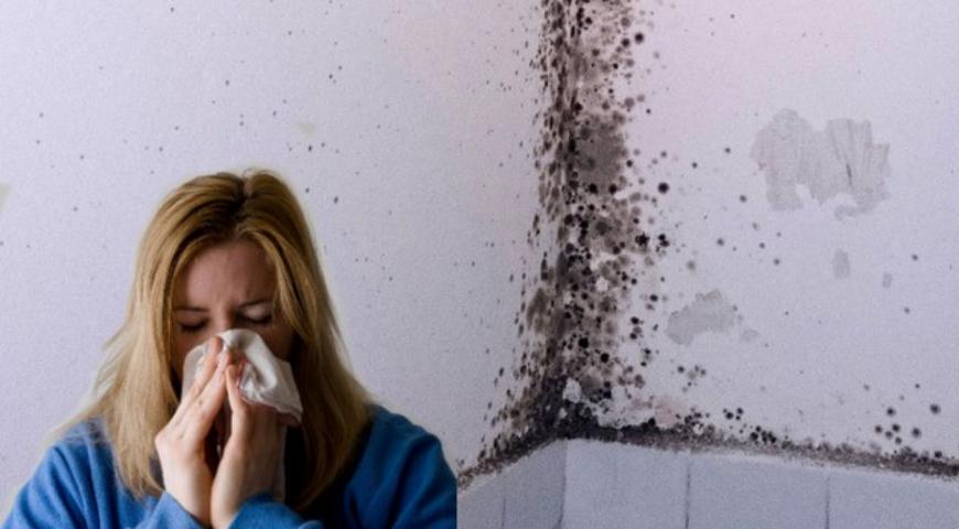 Muffa, umidità e polmoni