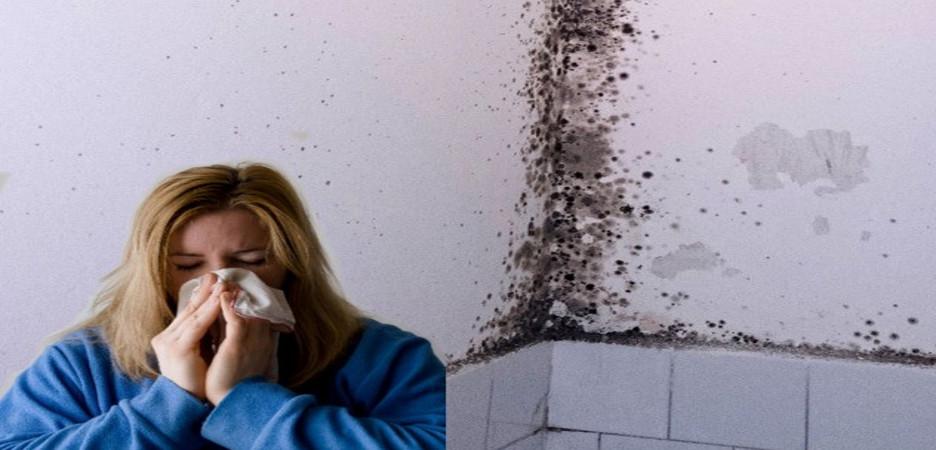 allergia muffa